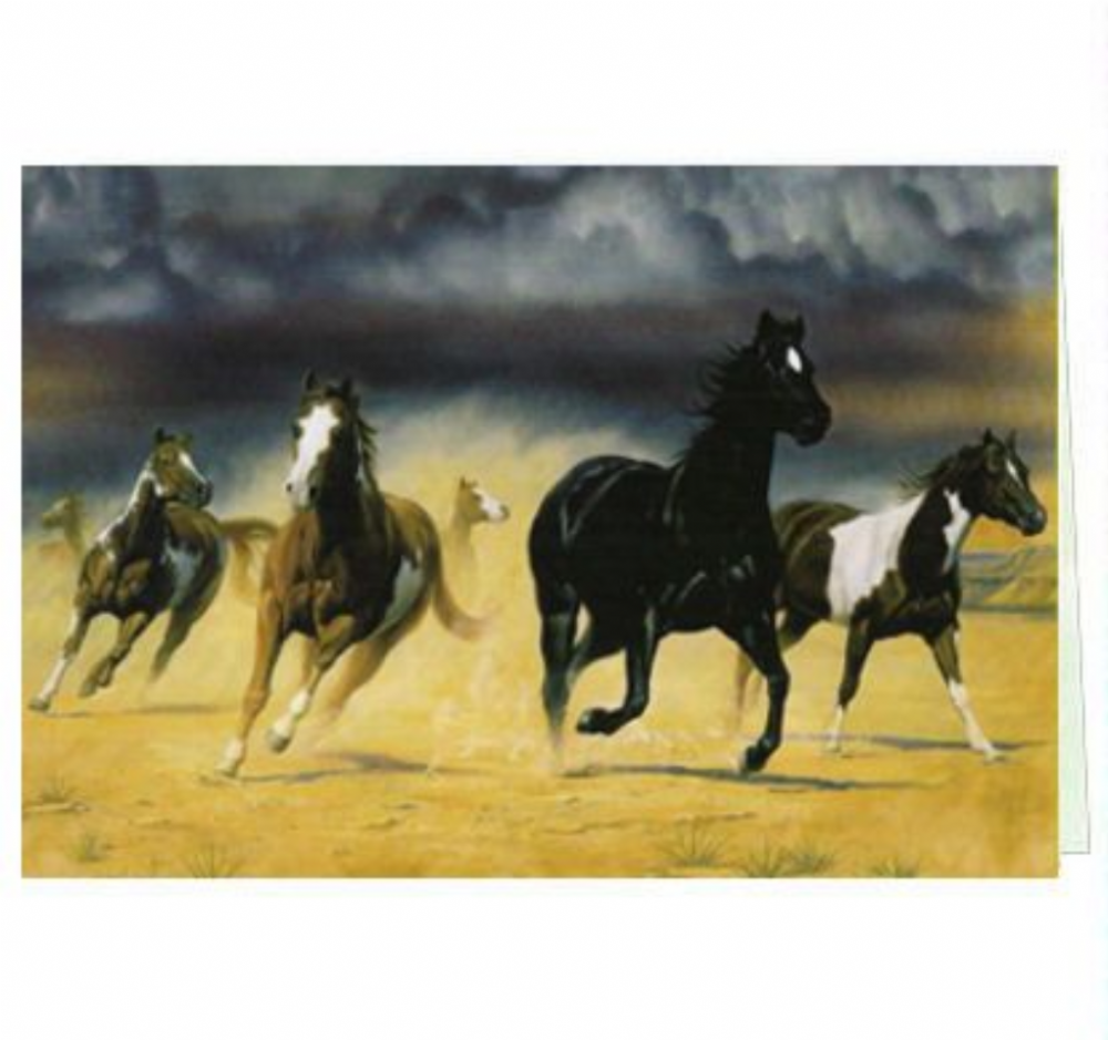 Horse Greeting Cards | Tree-Free Greetings® | Black Mesa by Bob Peters 10140